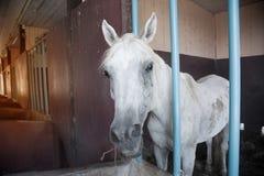 Un cheval dans son écurie à une ferme de goujon de cheval Photographie stock libre de droits