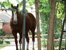 Un cheval dans une arrière cour et un Front Yard image libre de droits
