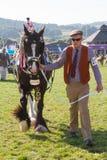 Un cheval de Shire étant montré au Salon Agricole Royal du Pays de Galles Photos libres de droits