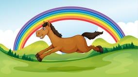 Un cheval de sourire et sautant Photographie stock