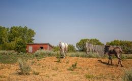 Un cheval et un âne marchant loin Photographie stock libre de droits