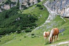 Un cheval et un poulain Photo stock