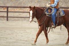 Un cheval et un cavalier Images libres de droits