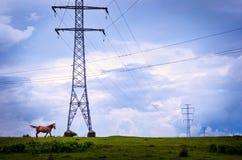 Un cheval flânant dans une promenade de milieu de l'été près des piliers de l'électricité Image libre de droits