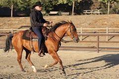 Un cheval fonctionnant avec un cowboy. I Photographie stock libre de droits