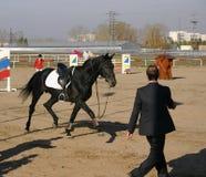 Un cheval fonctionnant loin après un sportif a tombé  Images stock