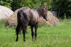 Un cheval frôle Images libres de droits