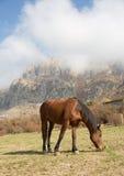 Un cheval frôle sur un fond des montagnes Photographie stock
