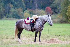 Un cheval gris frôle sur un pré Photographie stock libre de droits