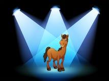 Un cheval à l'étape sous les projecteurs Images libres de droits