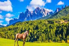 Un cheval lisse et mince photographie stock