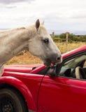 Un cheval sauvage sur un sommet de montagne dans le désert Photographie stock libre de droits