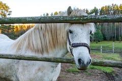 Un cheval seul est ennuyé et veut communiquer photo libre de droits