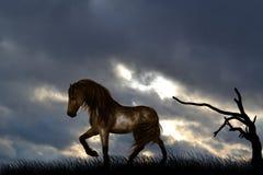 Un cheval solitaire dans un pré images libres de droits