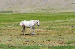 Un cheval sur la position d'herbe Photographie stock libre de droits