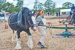 Un chevaux-vapeur Photo libre de droits