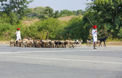Un chevrier de tribal de Rajasthani Images stock