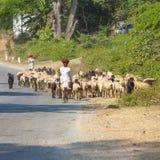 Un chevrier de tribal de Rajasthani Photographie stock