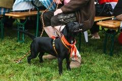 Un chien à côté du propriétaire à un festival traditionnel en Allemagne Amitié entre l'homme et l'animal Image libre de droits