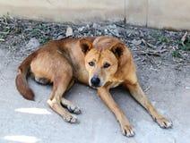 Un chien égaré photo libre de droits