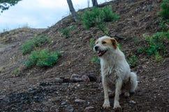 Un chien égaré seul photographie stock
