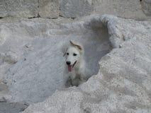 Un chien Photographie stock libre de droits
