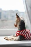 Un chien Photo libre de droits