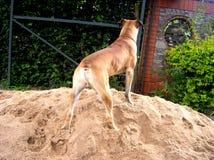 Un chien Images libres de droits