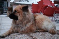 Un chien Royalty Free Stock Photos
