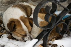 Un chien abandonné dormant dans la neige Photographie stock