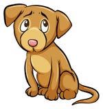 Un chien apprivoisé Photos libres de droits