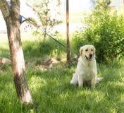 Un chien attaché à un arbre en plein air Image stock