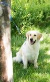 Un chien attaché à un arbre en plein air Image libre de droits