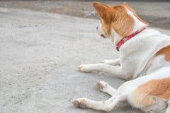 Un chien attend son propriétaire Photographie stock libre de droits