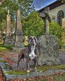 Un chien avec la tombe et garder ses maîtres graves dans HDR Photos stock