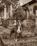 Un chien avec la tombe et garder ses maîtres graves dans HDR et le rétro style Photos libres de droits