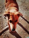 Un chien. Belle photo de chien Royalty Free Stock Photo