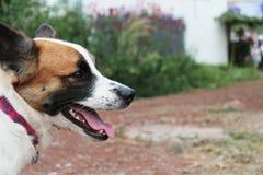 Un chien détend Image libre de droits
