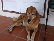 Un chien détendant sur un patio clips vidéos