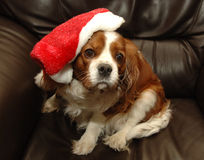 Chien de Noël Image libre de droits