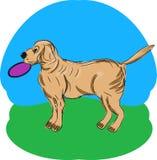 Un chien d'arrêt avec un frisbee Images libres de droits