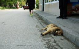 Un chien d'un berger et d'un cabot endormis sur l'asphalte Image stock