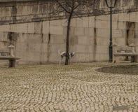 Un chien dans la place, Lisbonne, Portugal Images libres de droits