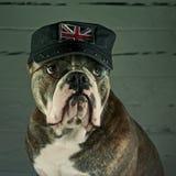 Un chien de l'Angleterre de soutien Images libres de droits