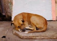 Un chien dormant sur la rue Photo libre de droits