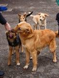 Un chien est un ami Un ami vrai Aide pour les chiens égarés Photographie stock