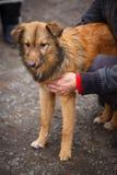 Un chien est un ami Un ami vrai Aide pour les chiens égarés Photos stock