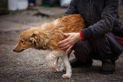 Un chien est un ami Un ami vrai Aide pour les chiens égarés Photos libres de droits
