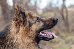 Un chien est le meilleur et vrai ami de l'homme Image stock