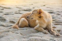Un chien est sur la plage Photos stock